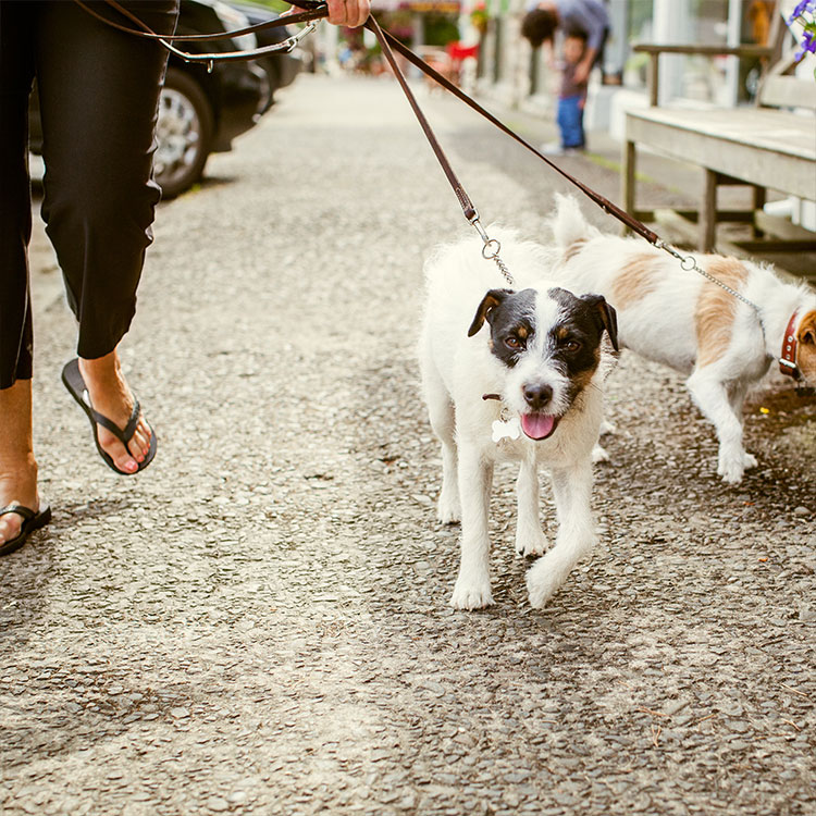 A Pet Friendly Hotel in Downtown Portland - The Benson